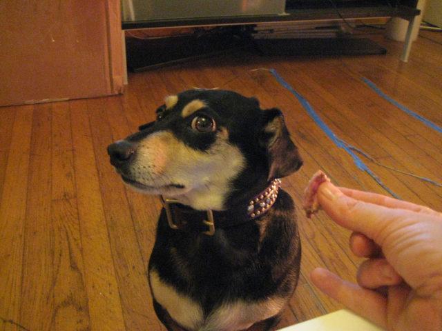 Enjoying Your Time With Dog Training